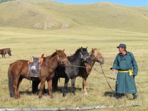 Guide de la randonnée à cheval