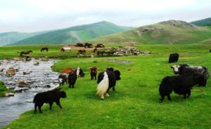 Voyage en Mongolie centrale